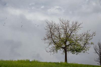 08_birds