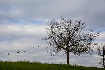 11_dove