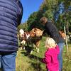 Hos kossorna i Skillerås och mormor & morfar på Bollebo.