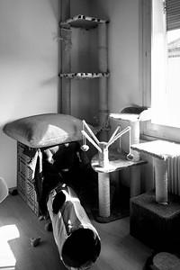 R. lebt mit zwei Katzen in einer Altbauwohnung, die für alle drei als artgerecht gilt.