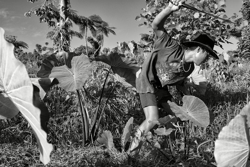 Jeune homme éclaircissant un champ de taros à la machette dans le secteur du mont Seuga. Ile d'Upolu/Archipel des Samoa