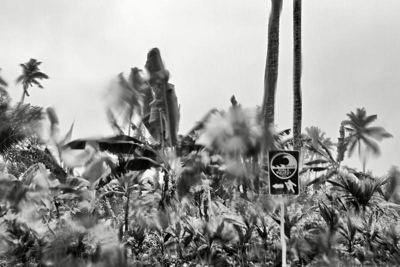 Panneau indiquant le chemin à suivre lors d'une évacuation en urgence devant un tsunami. Ile d'Upolu/Archipel des Samoa