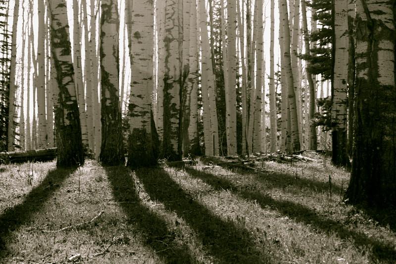Near Pagosa Springs, CO