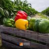 "Deremer Studios Jacksonville Commercial Photography -  <a href=""http://www.deremerstudios.com"">http://www.deremerstudios.com</a>"