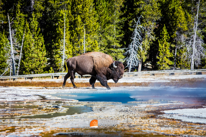 2015 Out West - Yellowstone South 087AA