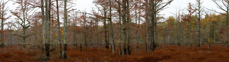 Buttonland swamp dominated by bald cypress and buttonbush