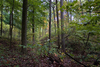 Maple-beech forest at Robeson Hills Nature Preserve