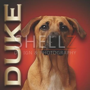 Custom Pet Portrait Creation - Duke