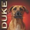 Custom Pet Portrait Creation - Duke