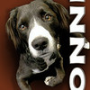 Custom Pet Portrait Creation - Onni