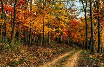 Fall on Ramm Road