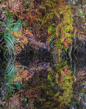 autumn fern pattern