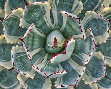 Cactus 1206