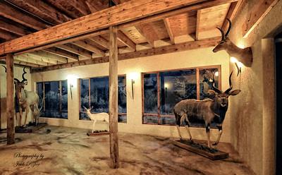 Kolobe safari observation animal  room
