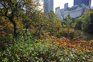 CENTRAL  PARK  IN  AUTUMN