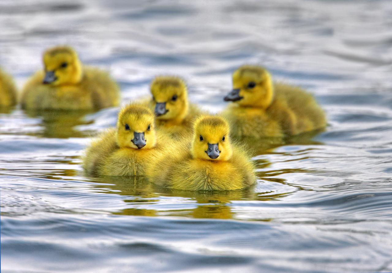 Fuzzy Fleet