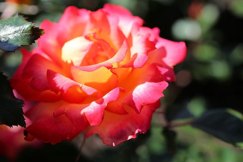 0431 Hot Pink Full.jpg