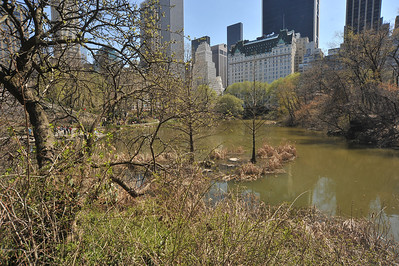 CENTRAL  PARK   IN  SPRING   -      Manhattan  NYC
