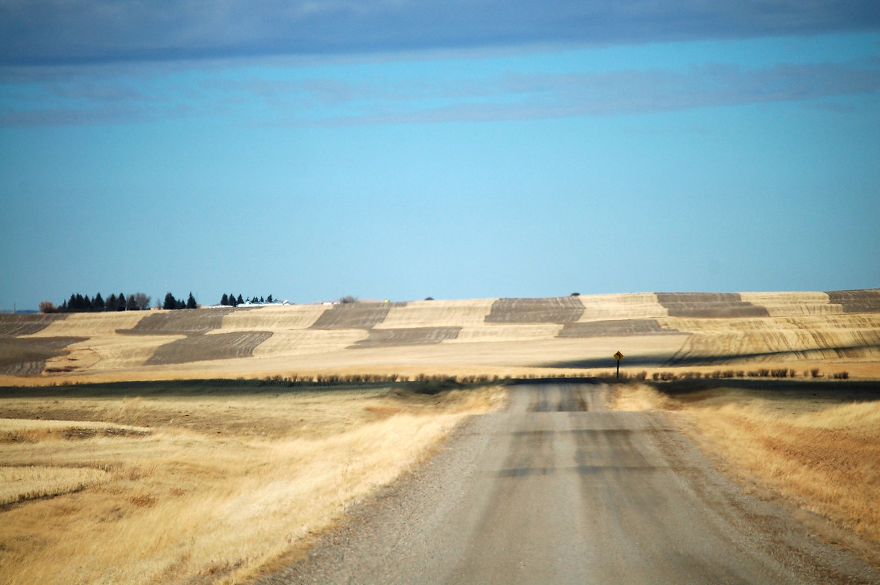 Gravel road into a checkerboard wheat field near Shelby, Montana