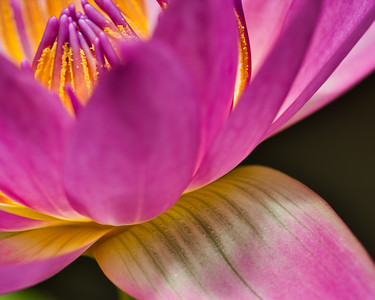 Water Lily 6297