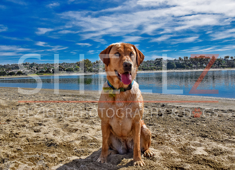 Althea - Fiesta Island - Color
