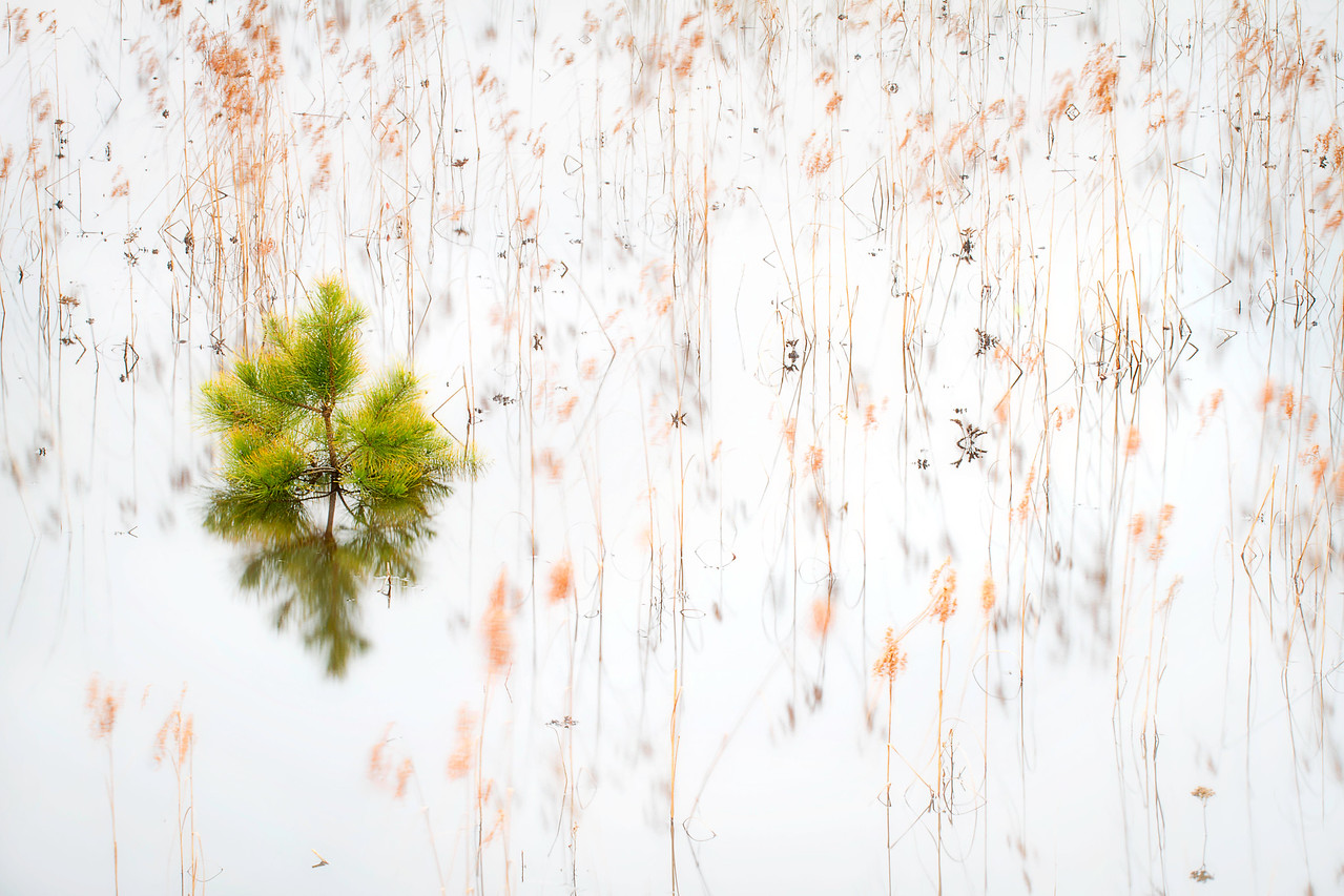 Modern Abstract and a tree