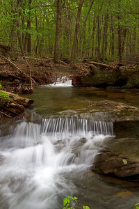Forest stream in Shawnee National Forest