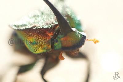 beetle_Dr_9