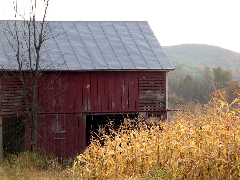 Old Barn and field Corn, Elroy, WI