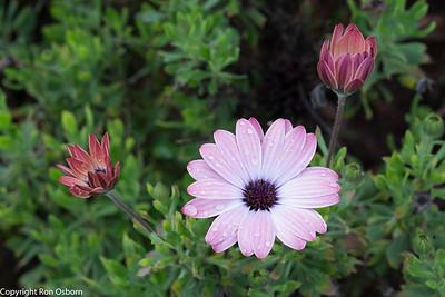 Flower#-1278