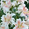 Flower lily tree