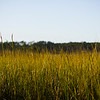 Virginia Wetlands Grass