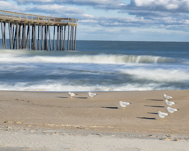 Pier with Birds 3954
