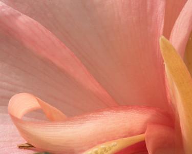 Pink Flower 9569