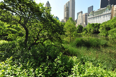 CENTRAL  PARK  IN  SUMMER    -    Manhattan,  NYC
