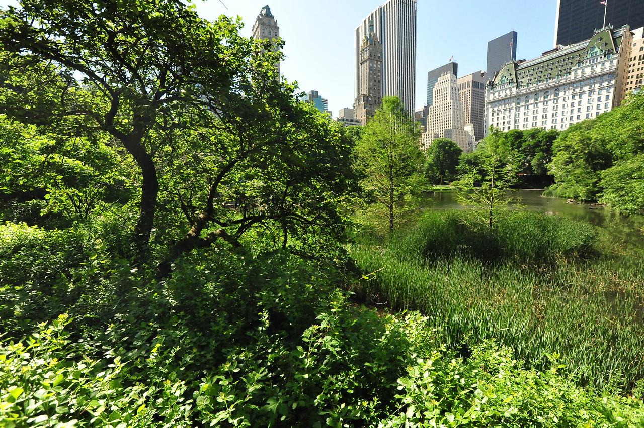 CENTRAL  PARK  IN  SUMMER    -    Manhattan,  NYC