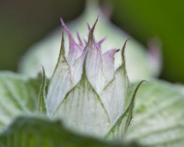 Flower Points 4694