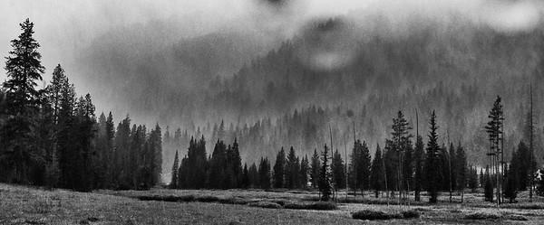 Rain in Yellowstone