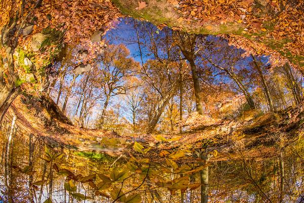 Reflected. Arden, DE, 2014.