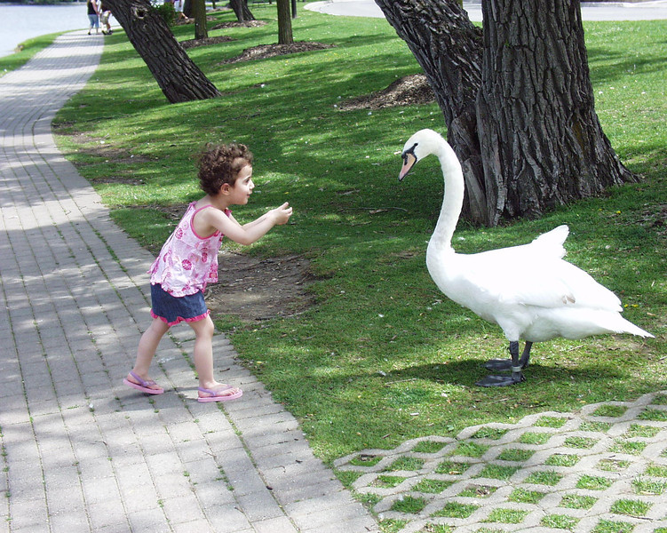 A girls faces off with a swan at Lake Victoria in Ontario