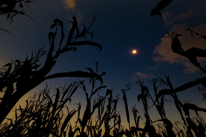 Corn field eclipse
