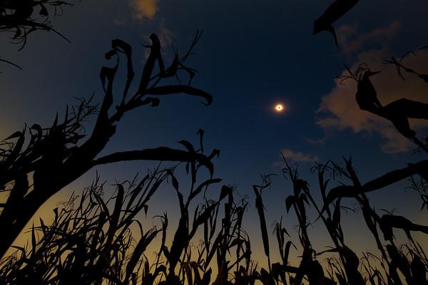 Corn field eclipse