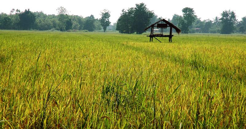 Field <br /> Sawankhalok, Sukhothai Province