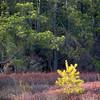 Little Yellow Tree