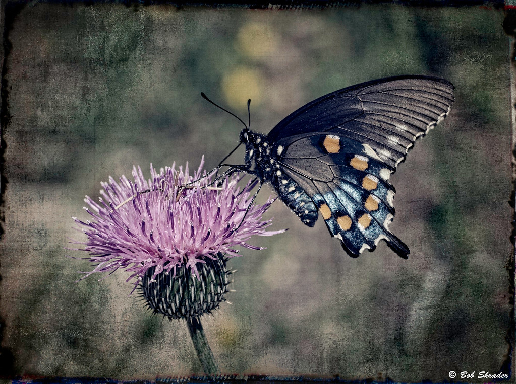 Stylized Flower and Butterfly