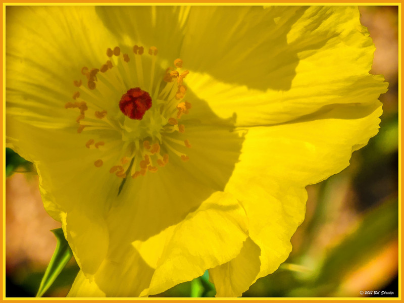 Stylized Mexican Prickly Poppy