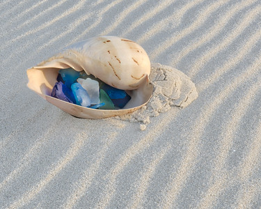 Shell in Sand 5188