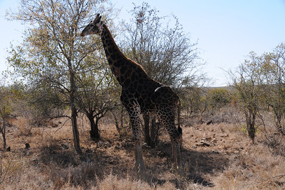Photo safari at Kruger National Park in South Africa