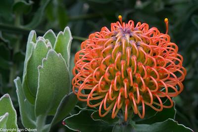 Flower#-2126
