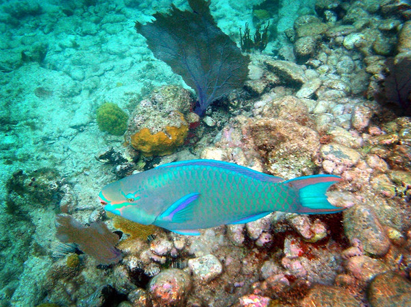 parrotfish_frame
